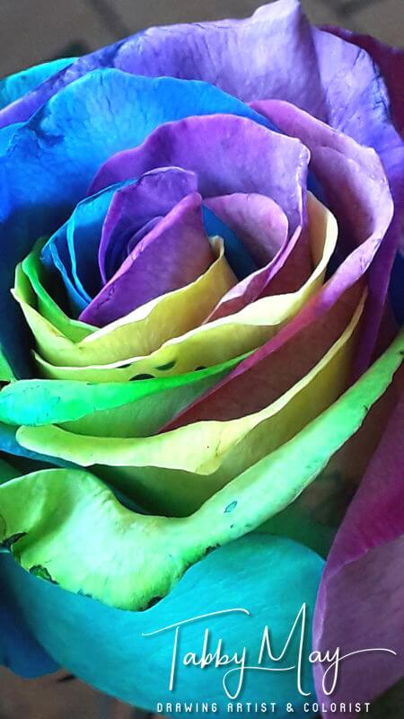 03 - artificially multi colored roses