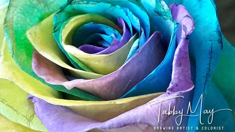 05 - artificially multi colored roses