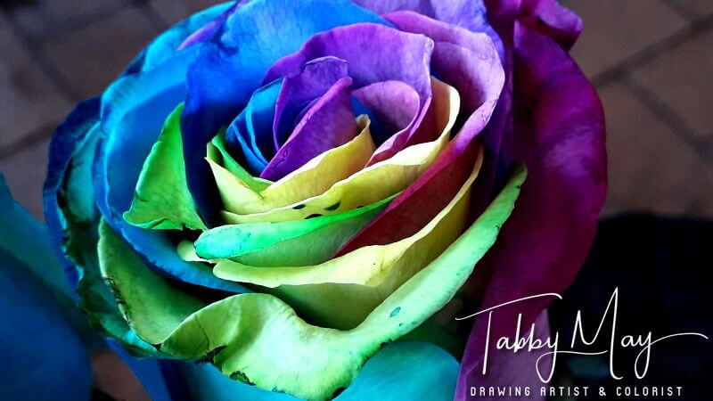 06 - artificially multi colored roses