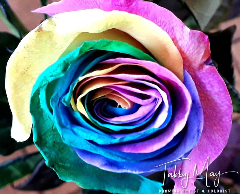 07 - artificially multi colored roses