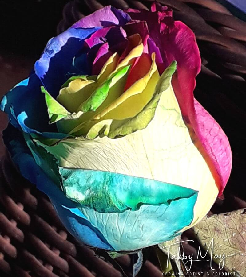 11 - artificially multi colored roses