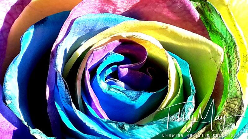 12 - artificially multi colored roses