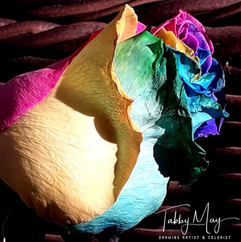 14 - artificially multi colored roses