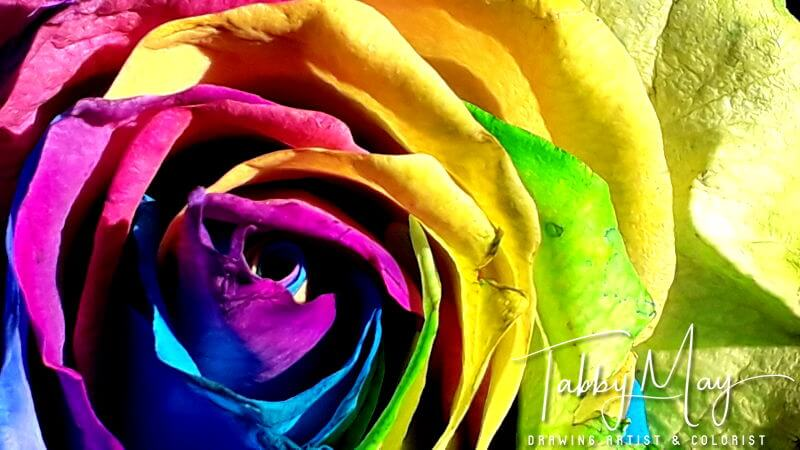 16 - artificially multi colored roses
