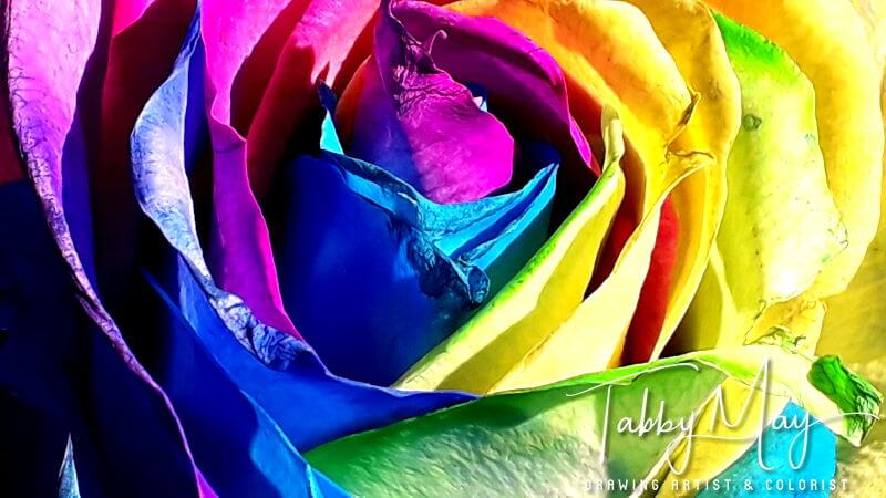17 - artificially multi colored roses
